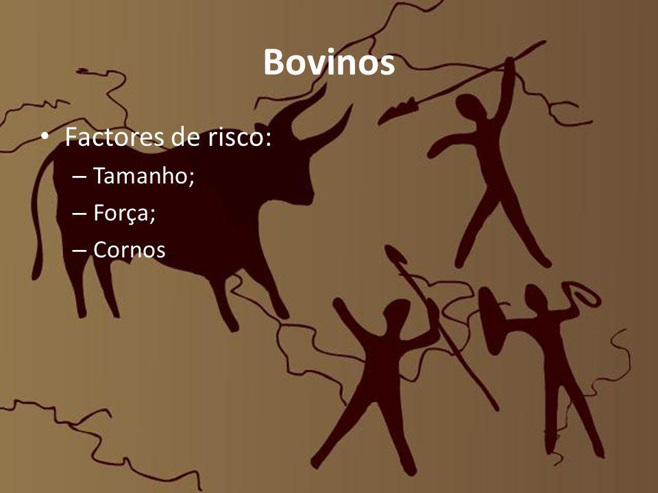 Bovinos Factores de risco: Tamanho; Força; Cornos.