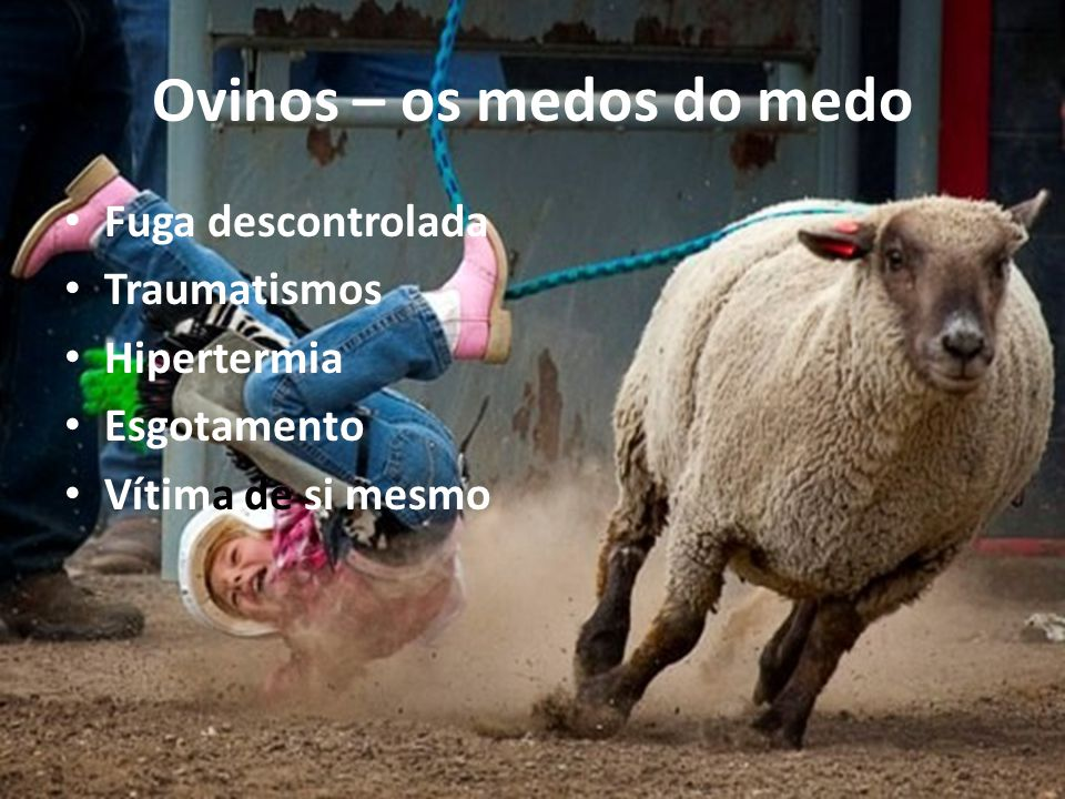 Ovinos – os medos do medo