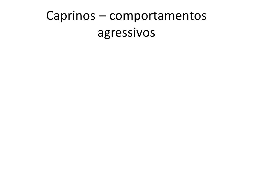Caprinos – comportamentos agressivos