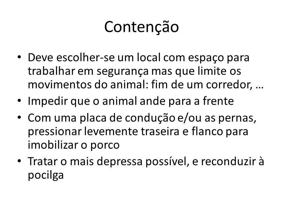 Contenção Deve escolher-se um local com espaço para trabalhar em segurança mas que limite os movimentos do animal: fim de um corredor, …
