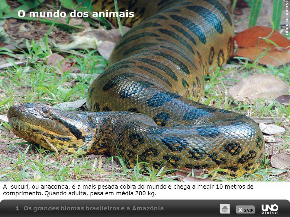 O mundo dos animaisFABIO COLOMBINI.