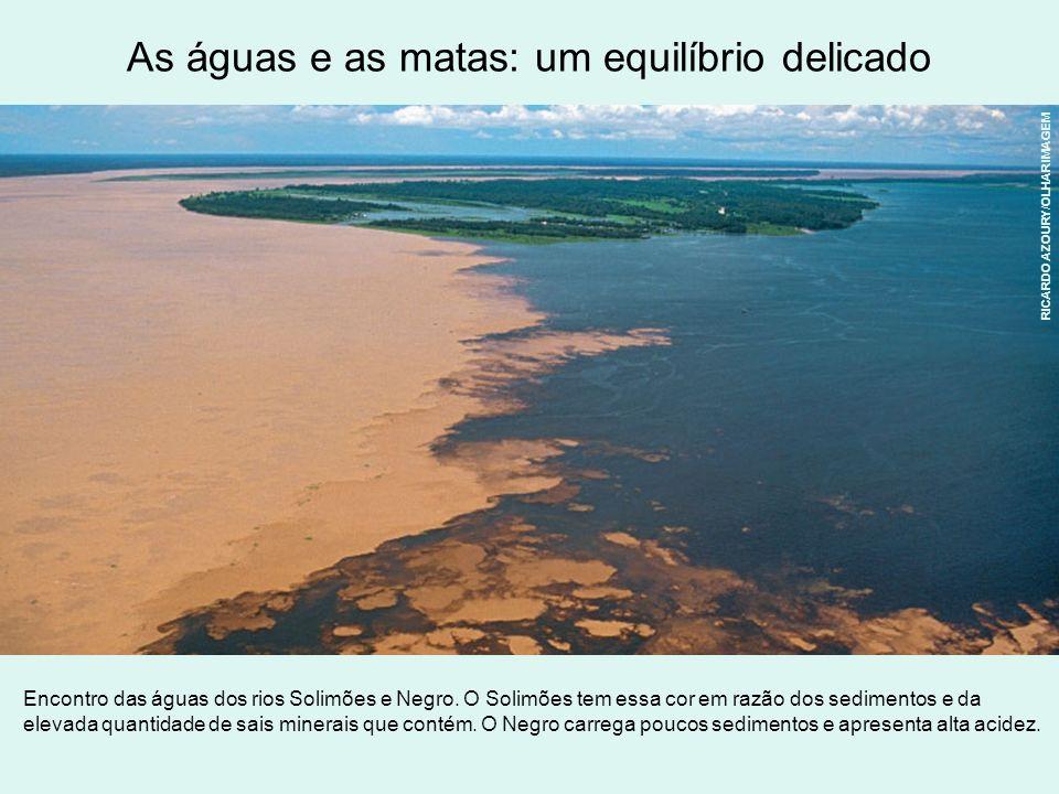As águas e as matas: um equilíbrio delicado