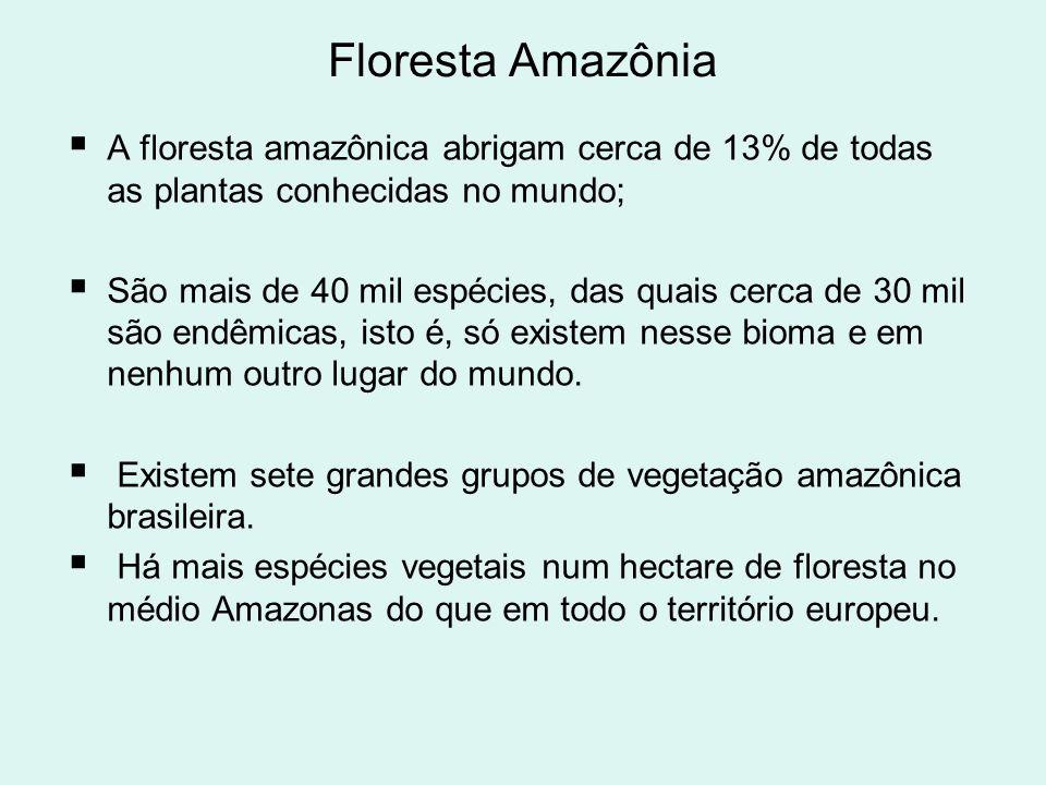 Floresta Amazônia A floresta amazônica abrigam cerca de 13% de todas as plantas conhecidas no mundo;