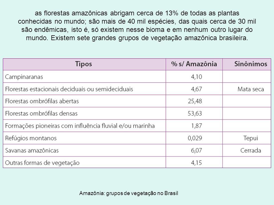 as florestas amazônicas abrigam cerca de 13% de todas as plantas conhecidas no mundo; são mais de 40 mil espécies, das quais cerca de 30 mil são endêmicas, isto é, só existem nesse bioma e em nenhum outro lugar do mundo. Existem sete grandes grupos de vegetação amazônica brasileira.