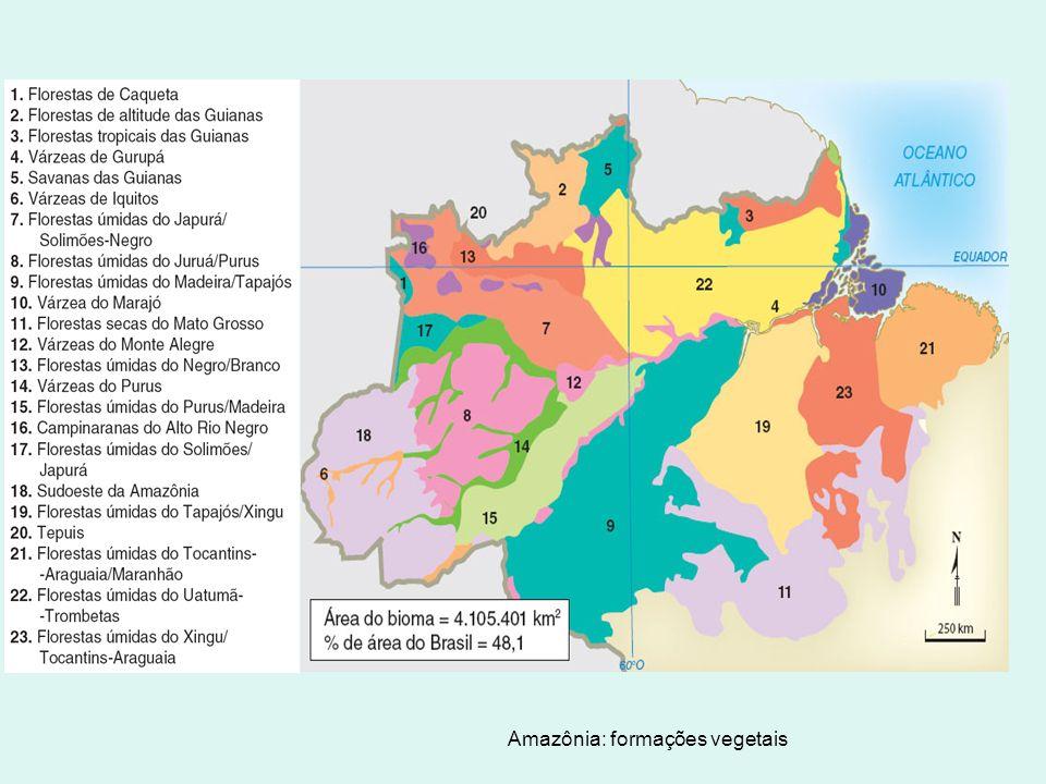 Amazônia: formações vegetais