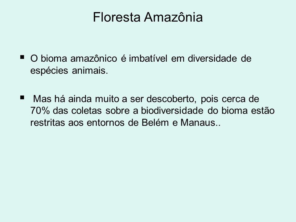 Floresta Amazônia O bioma amazônico é imbatível em diversidade de espécies animais.