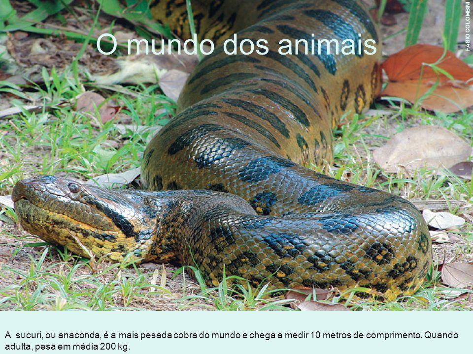 O mundo dos animais FABIO COLOMBINI.