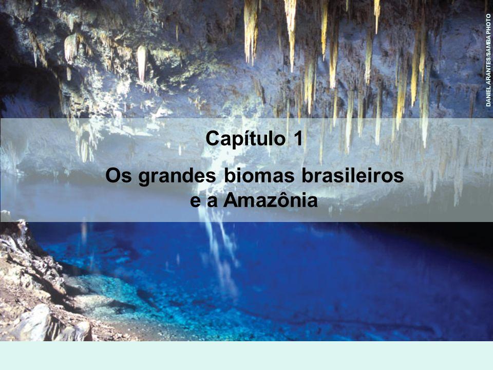 Os grandes biomas brasileiros e a Amazônia