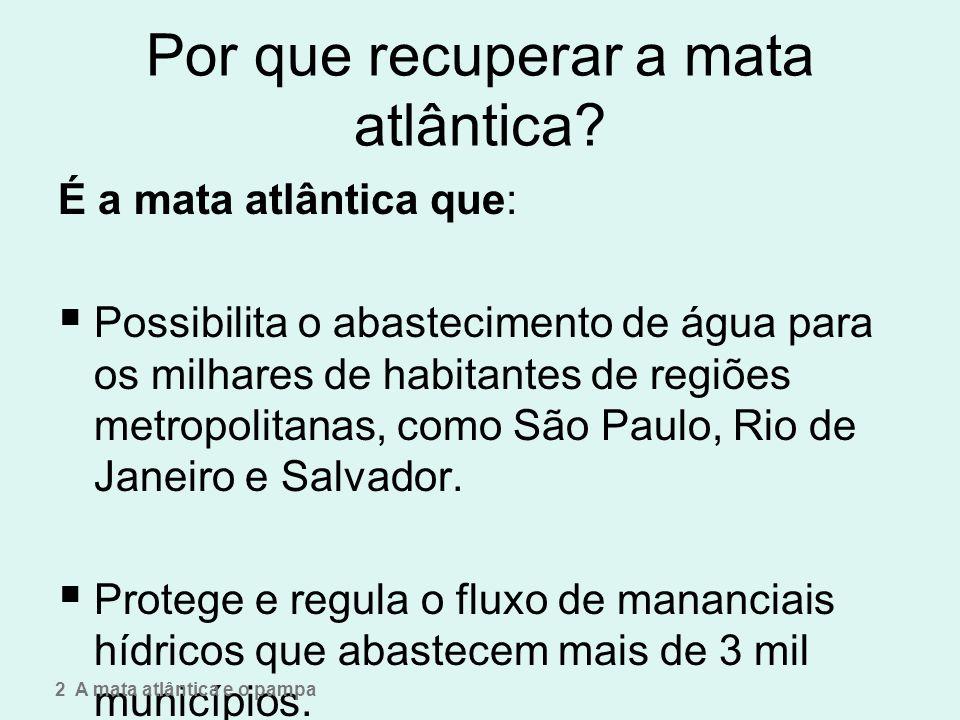 Por que recuperar a mata atlântica