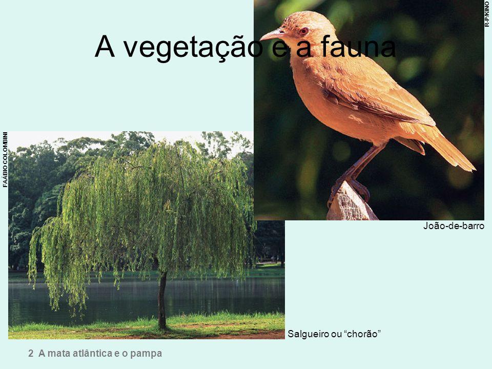 A vegetação e a fauna João-de-barro Salgueiro ou chorão