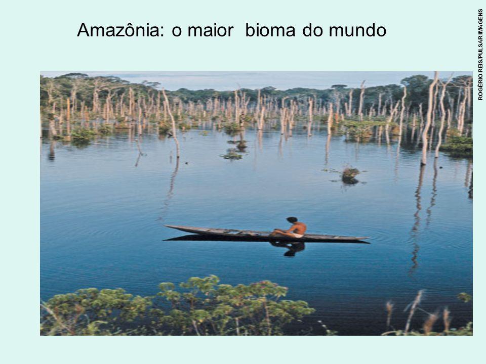 Amazônia: o maior bioma do mundo
