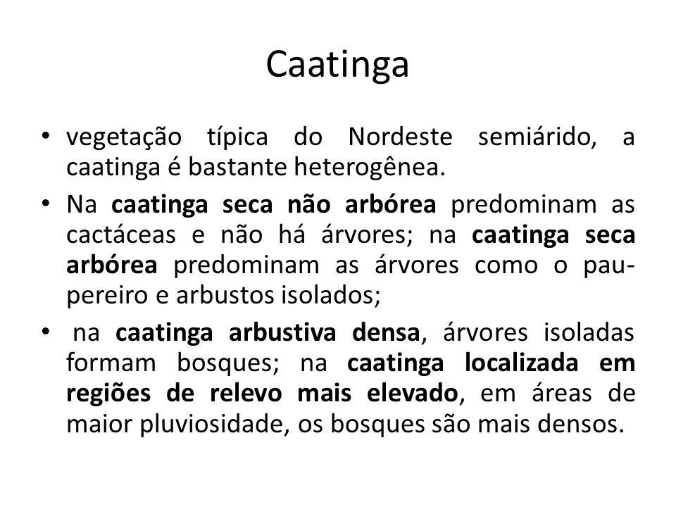 Caatinga vegetação típica do Nordeste semiárido, a caatinga é bastante heterogênea.