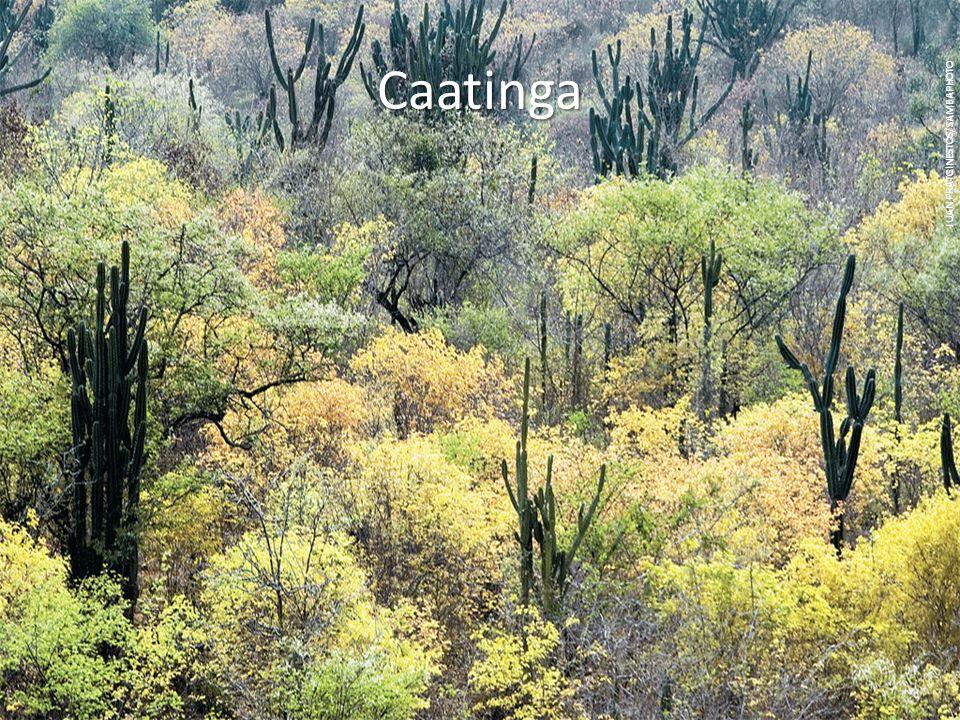 Caatinga JUAN PRATGINESTÓS/SAMBAPHOTO.