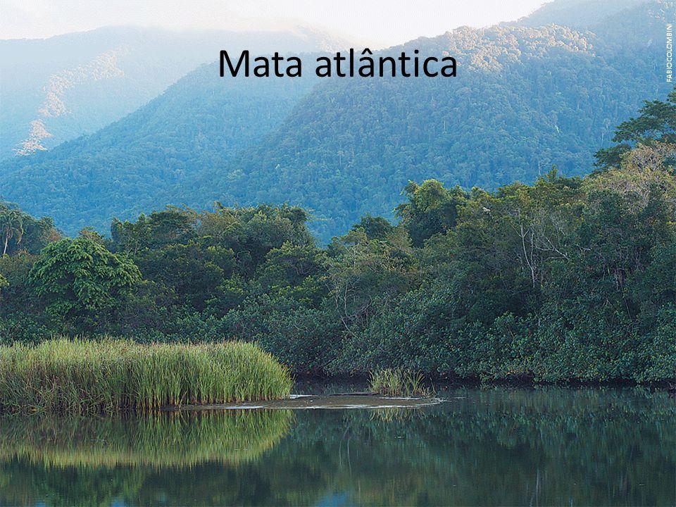 Mata atlântica FABIO COLOMBINI.