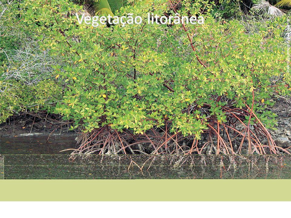 Vegetação litorânea MARCIO LOURENÇO/PULSAR IMAGENS.