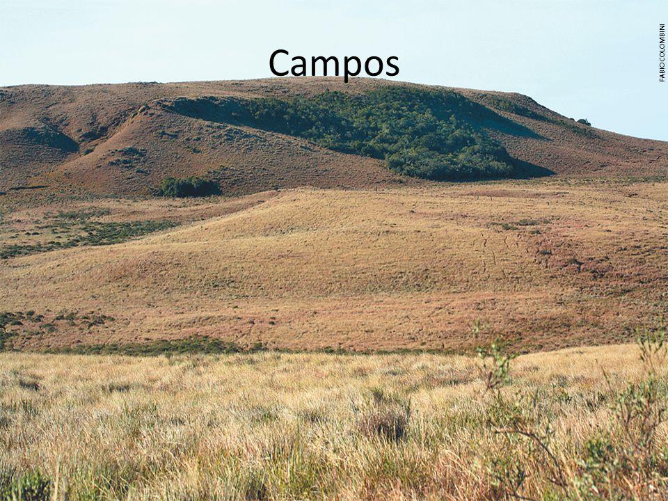 Campos FABIO COLOMBINI.