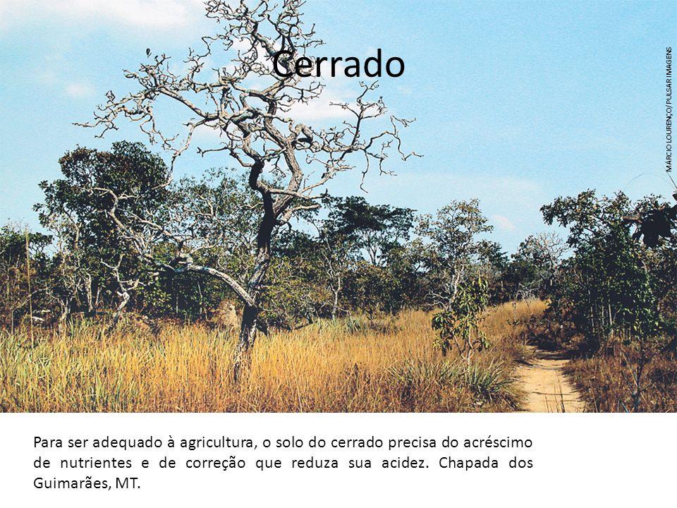 Cerrado MÁRCIO LOURENÇO/PULSAR IMAGENS.