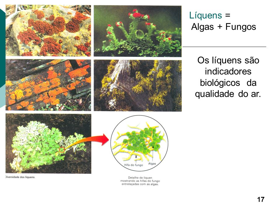 Os líquens são indicadores biológicos da qualidade do ar.