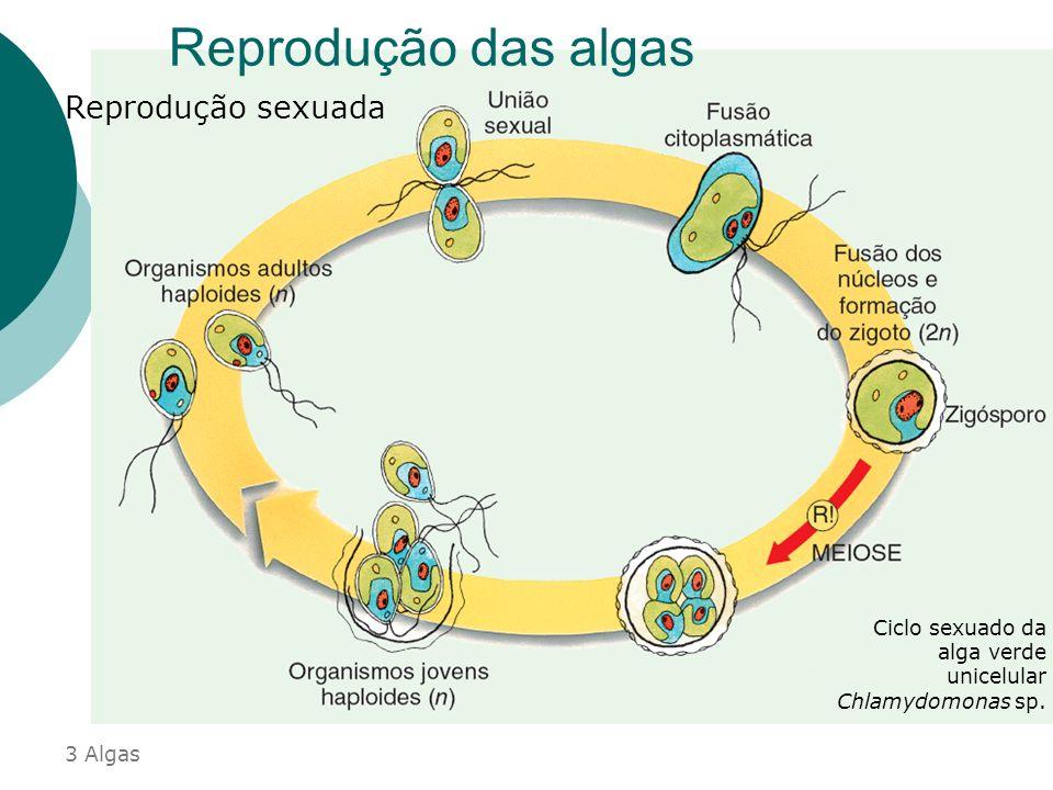 Reprodução das algas Reprodução sexuada