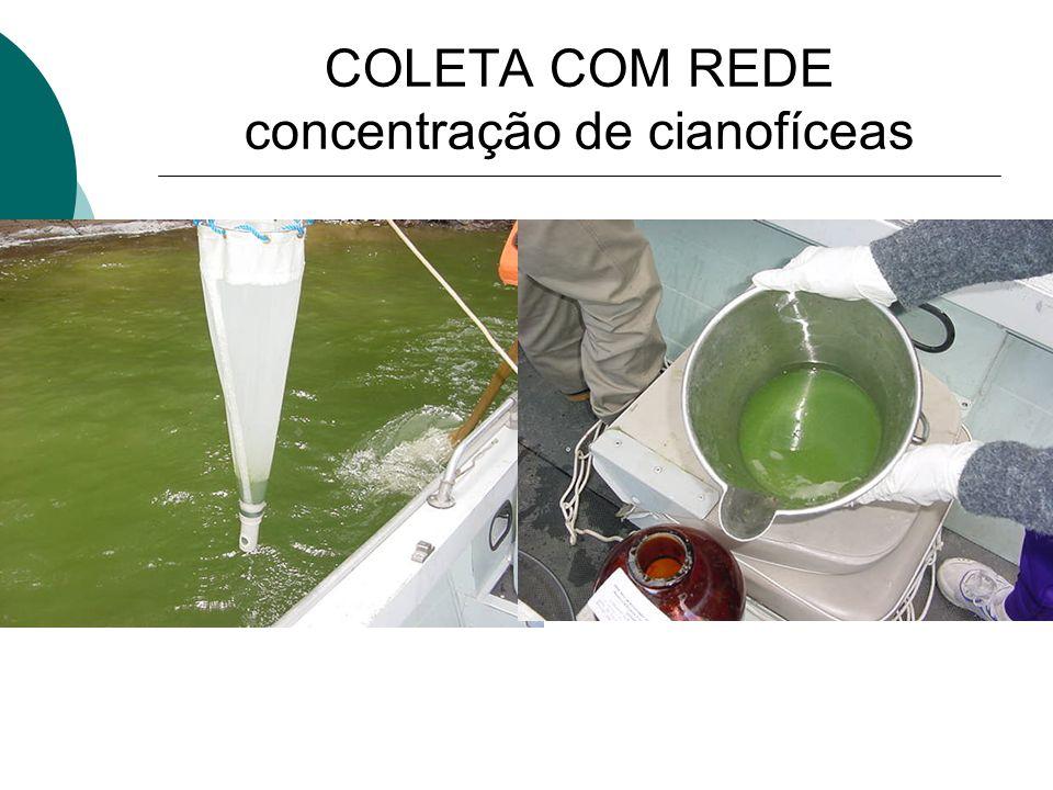 COLETA COM REDE concentração de cianofíceas