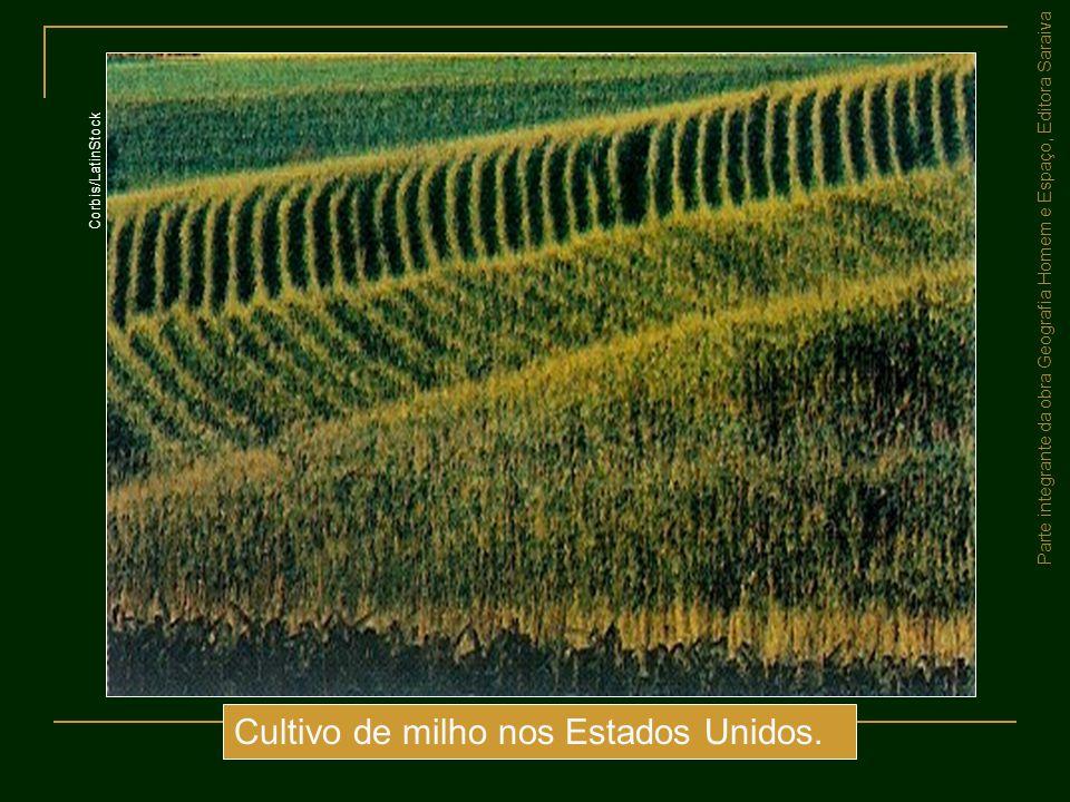 Cultivo de milho nos Estados Unidos.