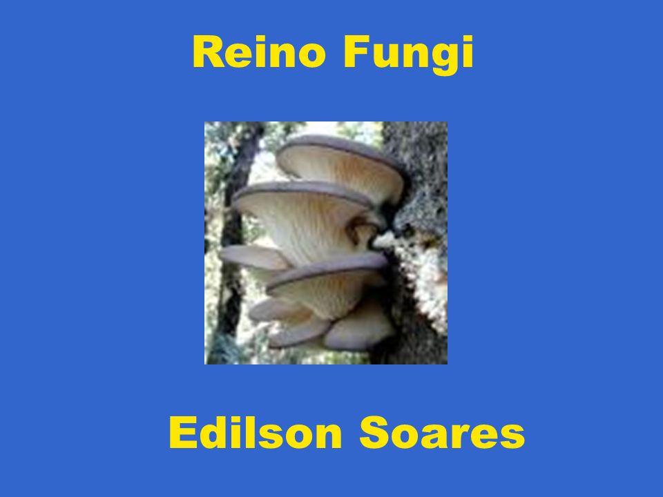 Reino Fungi Edilson Soares