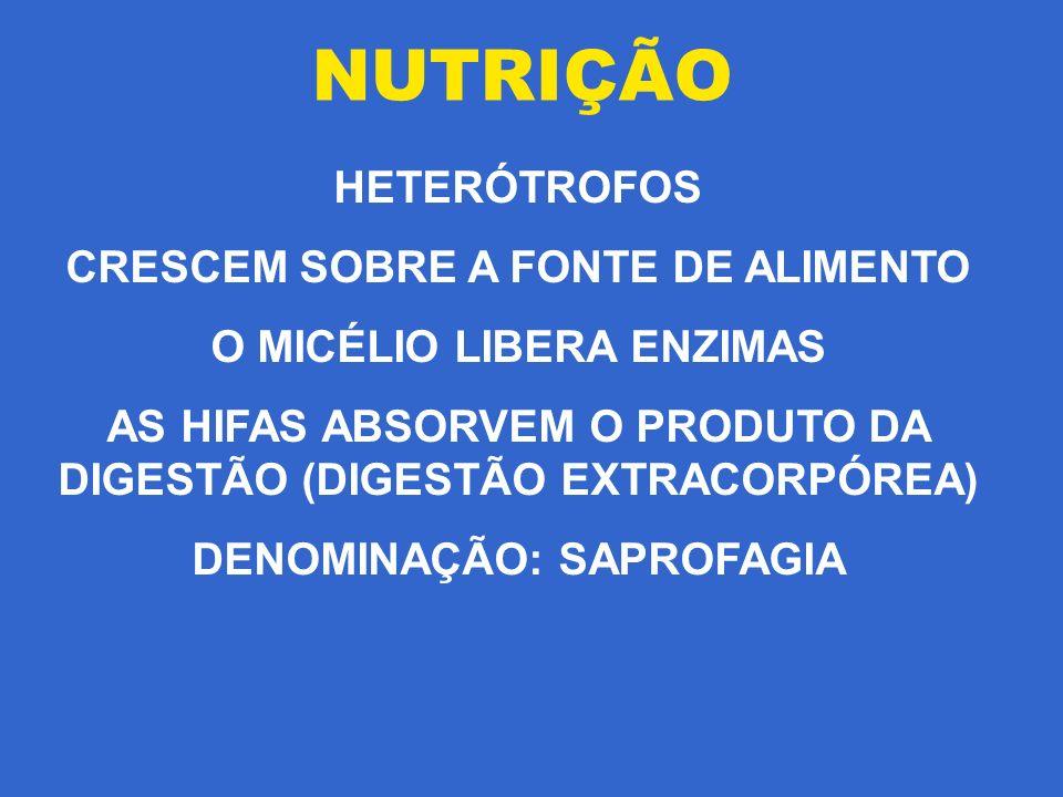 NUTRIÇÃO HETERÓTROFOS CRESCEM SOBRE A FONTE DE ALIMENTO