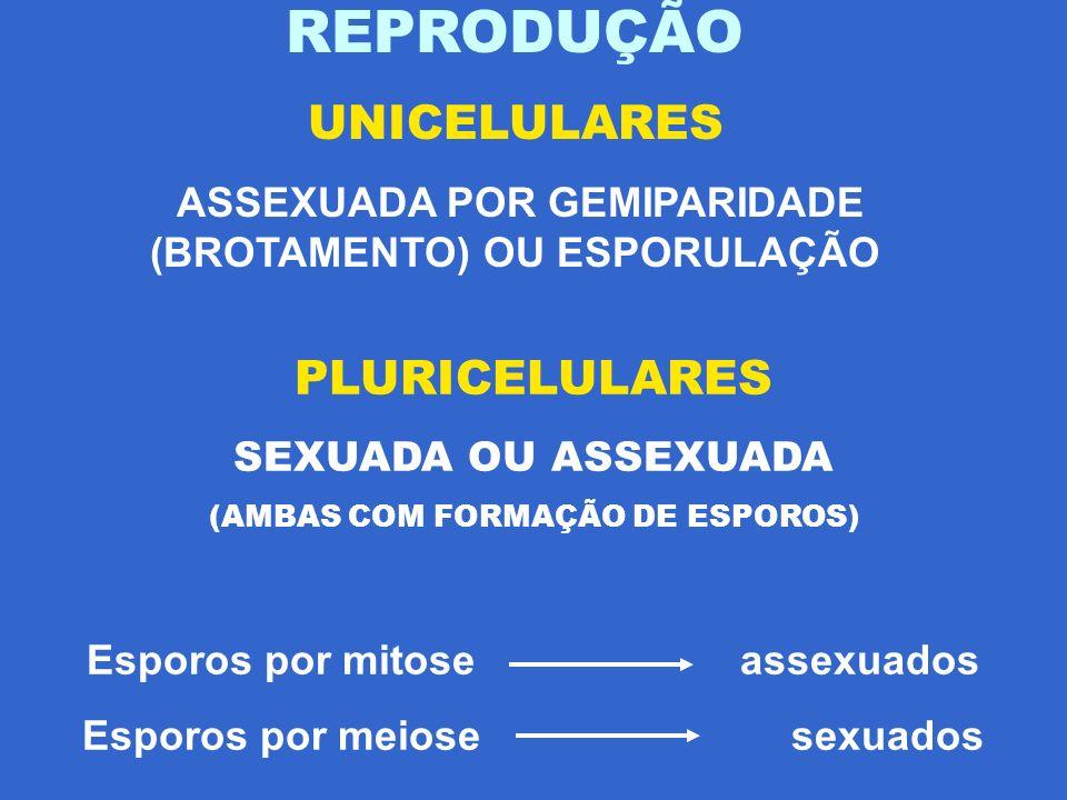 REPRODUÇÃO UNICELULARES PLURICELULARES
