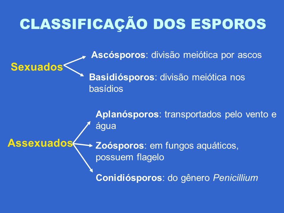 CLASSIFICAÇÃO DOS ESPOROS