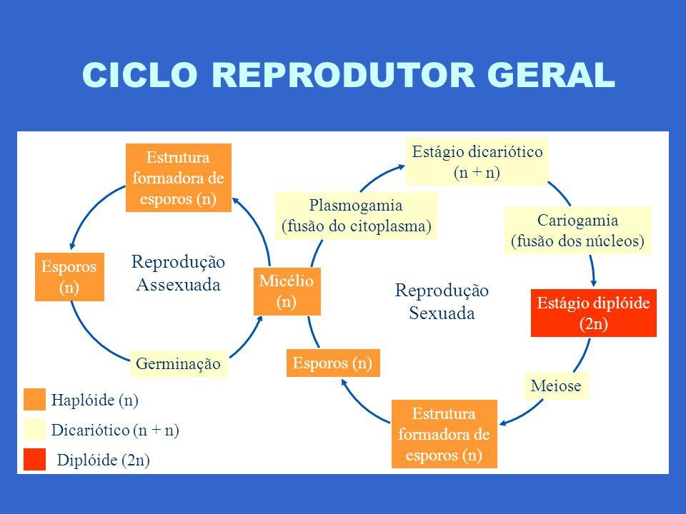 CICLO REPRODUTOR GERAL