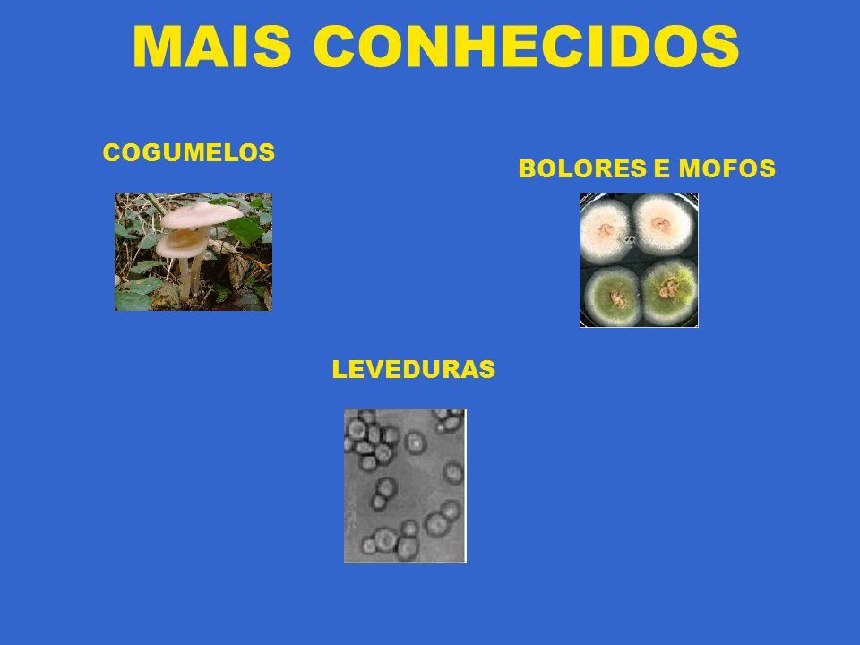 MAIS CONHECIDOS COGUMELOS BOLORES E MOFOS LEVEDURAS