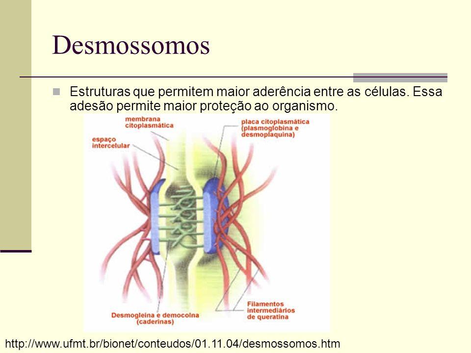Desmossomos Estruturas que permitem maior aderência entre as células. Essa adesão permite maior proteção ao organismo.