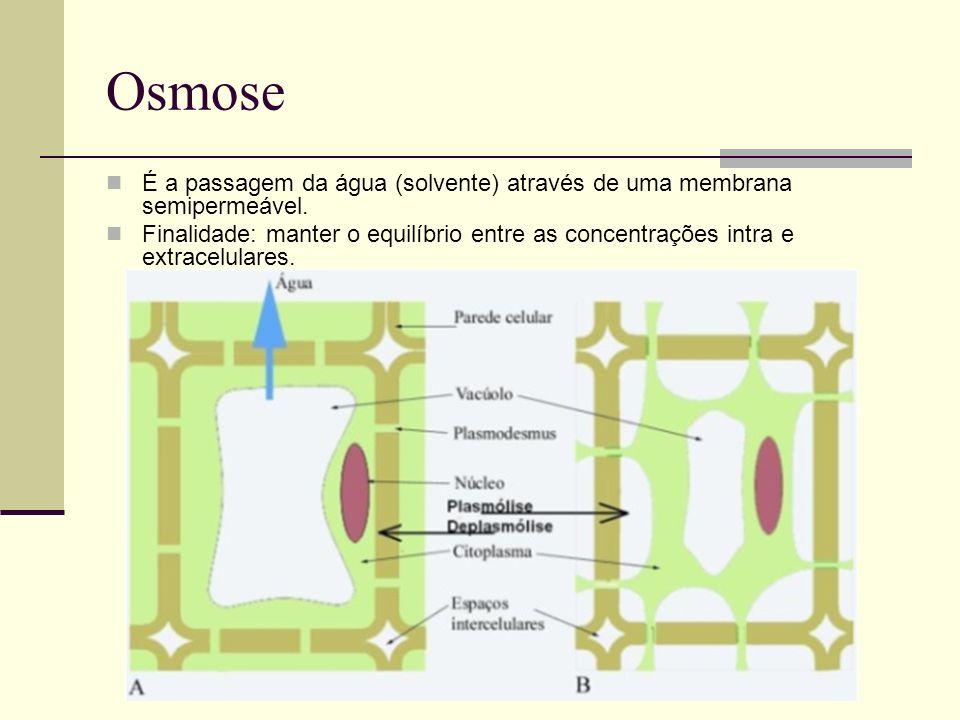 Osmose É a passagem da água (solvente) através de uma membrana semipermeável.
