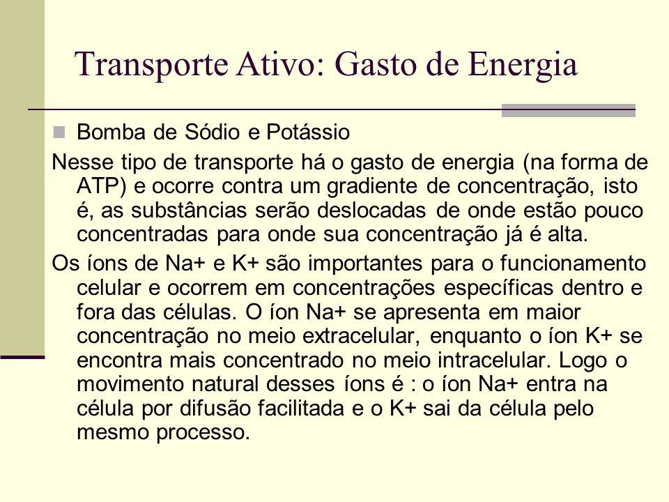 Transporte Ativo: Gasto de Energia