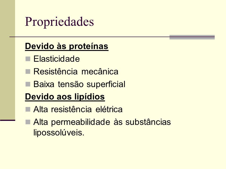Propriedades Devido às proteínas Elasticidade Resistência mecânica