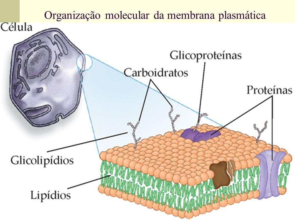 Organização molecular da membrana plasmática