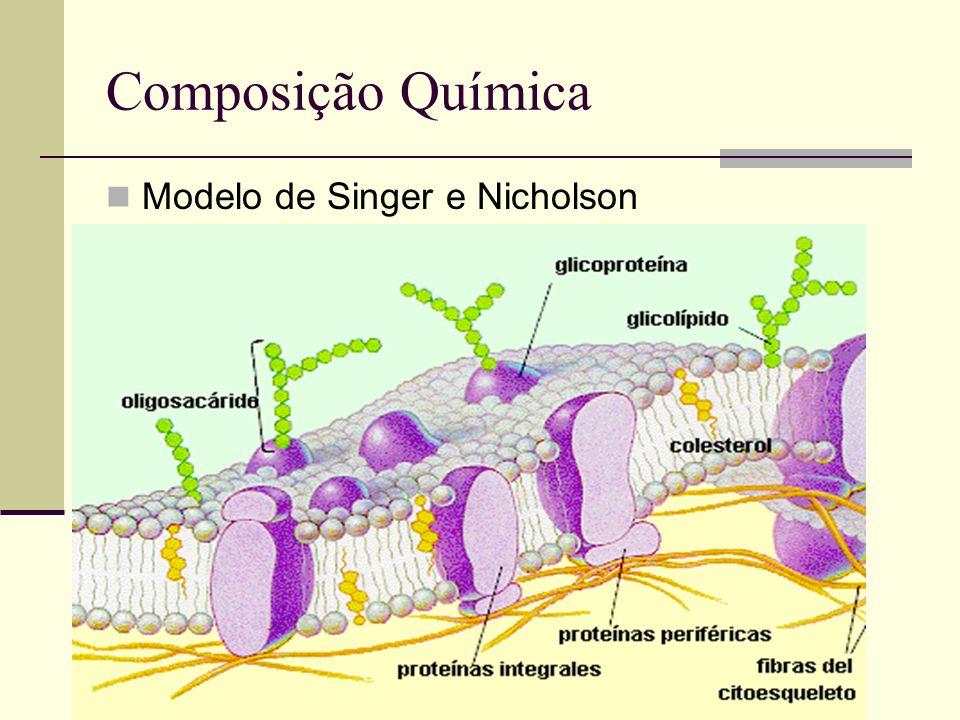 Composição Química Modelo de Singer e Nicholson