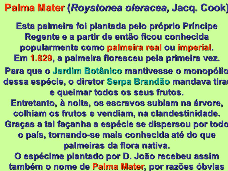 Palma Mater (Roystonea oleracea, Jacq. Cook)