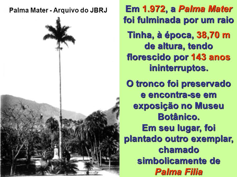 Em 1.972, a Palma Mater foi fulminada por um raio