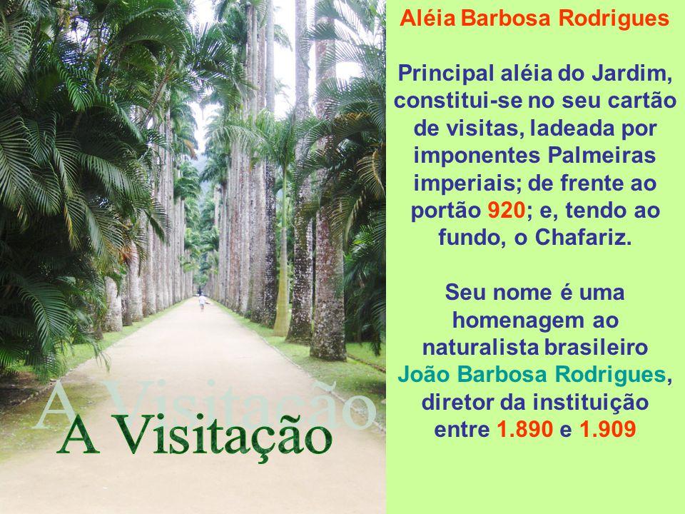 Aléia Barbosa Rodrigues
