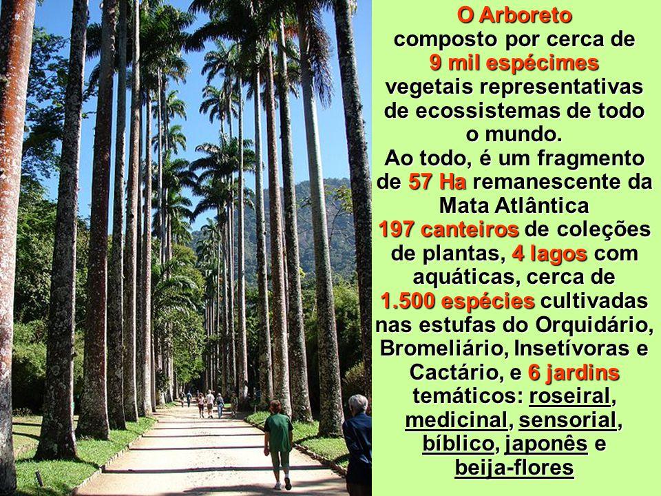 O Arboreto composto por cerca de 9 mil espécimes vegetais representativas de ecossistemas de todo o mundo.