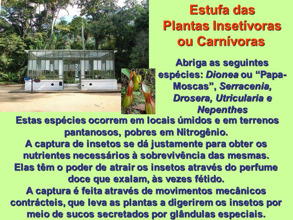 Estufa das Plantas Insetívoras ou Carnívoras