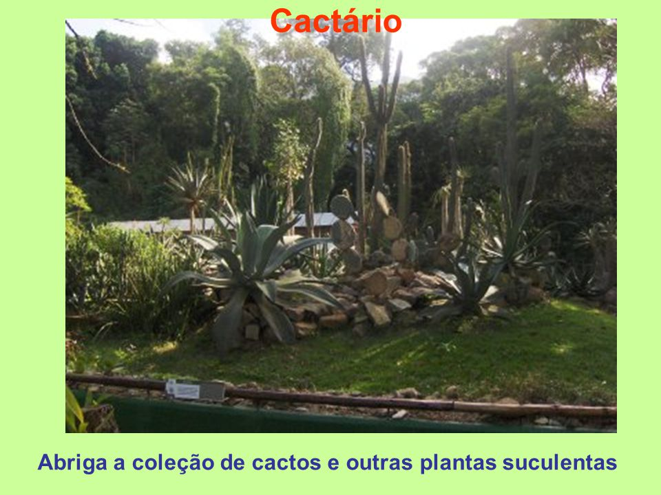 Abriga a coleção de cactos e outras plantas suculentas