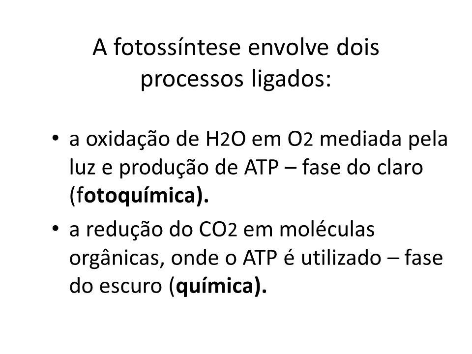 A fotossíntese envolve dois processos ligados: