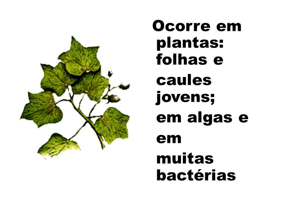 caules jovens; em algas e em muitas bactérias