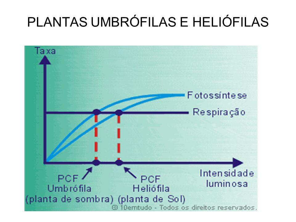 PLANTAS UMBRÓFILAS E HELIÓFILAS