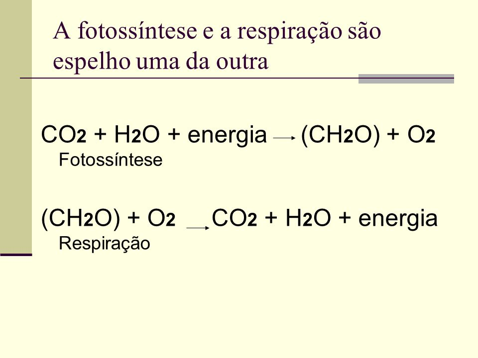 A fotossíntese e a respiração são espelho uma da outra