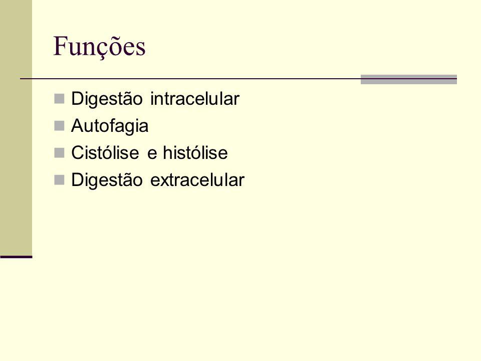 Funções Digestão intracelular Autofagia Cistólise e histólise