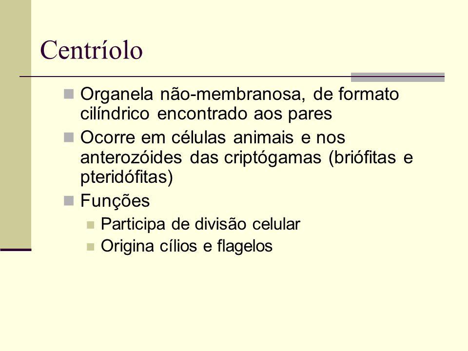 Centríolo Organela não-membranosa, de formato cilíndrico encontrado aos pares.