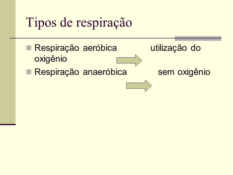 Tipos de respiração Respiração aeróbica utilização do oxigênio